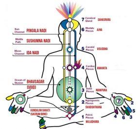 kundalini-chakras-system